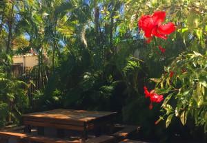 Our beautiful Restaurant Garden